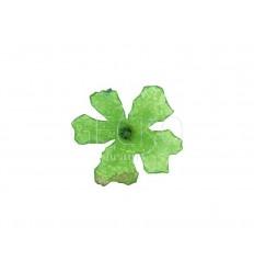 Adornos para uñas flores secas - vert